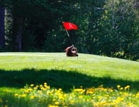 Bear-on-course-with-flag-sm